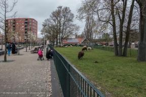 Schalk Burgerplein - kinderboerderij Woelige Stal-2