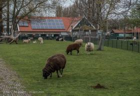 Schalk Burgerplein - kinderboerderij Woelige Stal-3