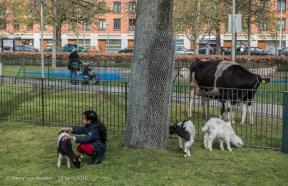 Schalk Burgerplein - kinderboerderij Woelige Stal-4