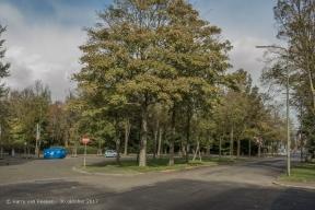 Nieuwe Duinweg - Westbroekpark-Duttendel-5