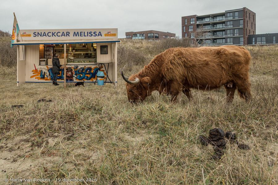 Westduinpark - Snackcar Melissa - Schorse Hooglanders